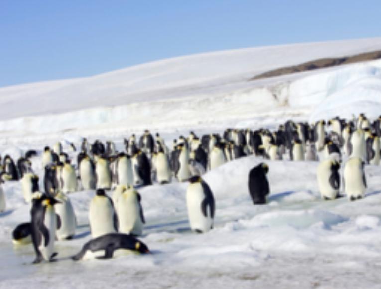 SEO: Estrategia SEO para rediseño y migración de sitios web