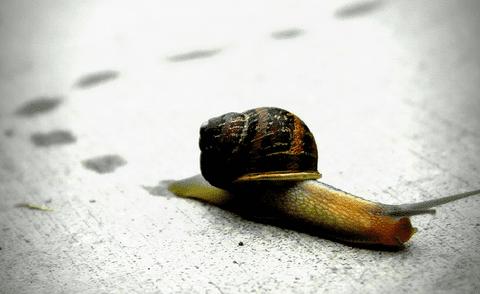 snail_large.jpg